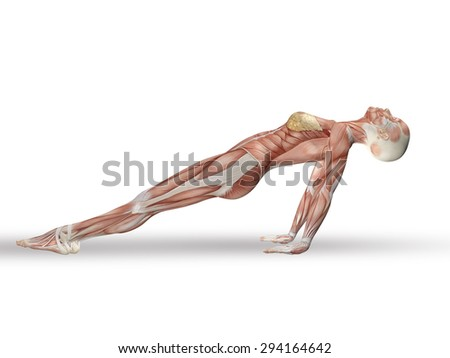 3D render of a female figure with spine in yoga position - stock photo