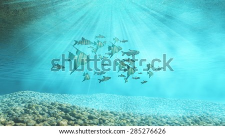 3D render of an underwater background with shoal of fish - stock photo