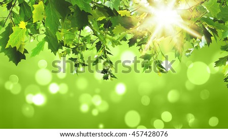3D render of green leaves on a sunny green background