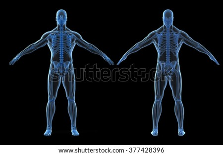 3d render of human body and skeleton - stock photo
