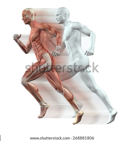 3D render of male figures running with skin and muscle map - stock photo