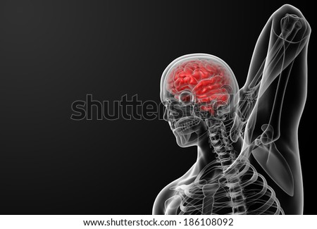 3d render of the human brain anatomy - front view - stock photo