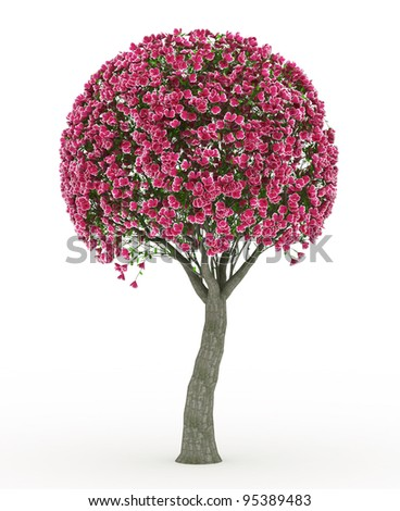 3d render Peach blossom isolated on white - stock photo