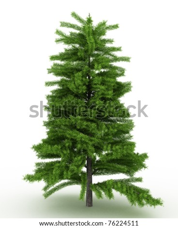 3d render pine tree isolated over white - stock photo