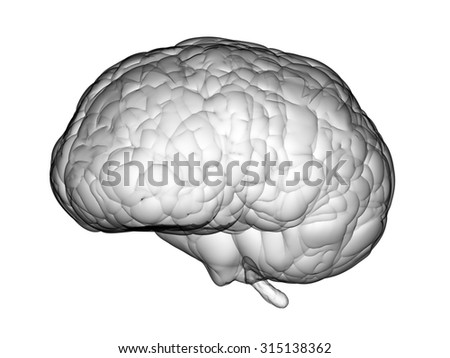 3d rendered brain  - stock photo