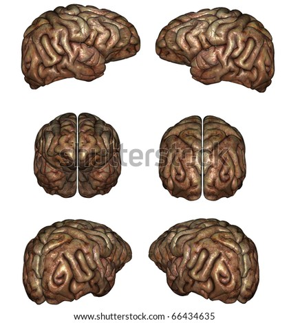 3D rendered human brain on white background isolated - stock photo
