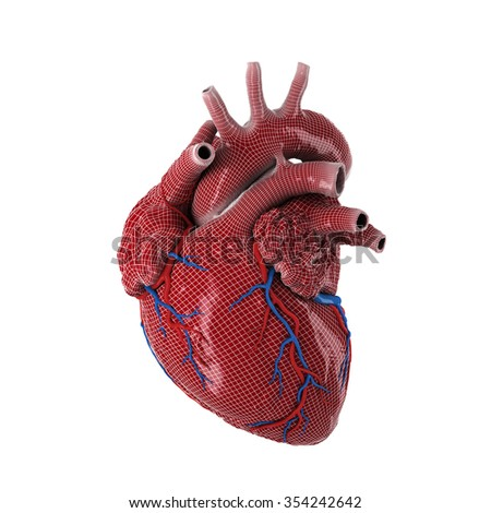 3d rendered human heart isolated on white background. - stock photo