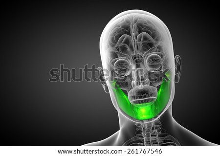 3d rendered illustration - jaw bone - front view