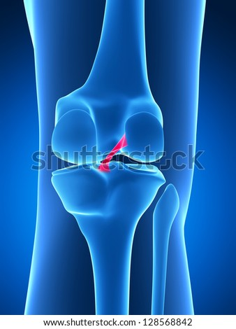 3d rendered illustration - knee anatomy