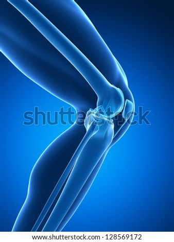 3d rendered illustration - knee anatomy - stock photo
