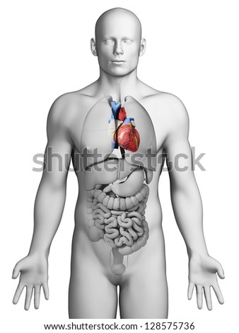 3d rendered illustration - male heart - stock photo