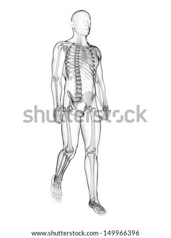 3d rendered illustration of a walking male