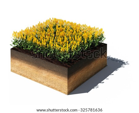 3d rendered illustration of isometric field with rape on a cross section of ground isolated on white - stock photo