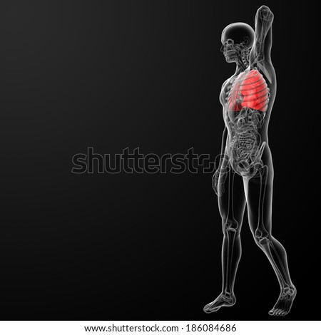 3d rendered illustration of  lung - side view