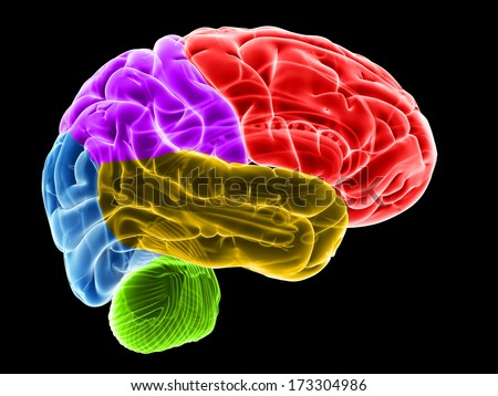 3d rendered illustration of the brain sections