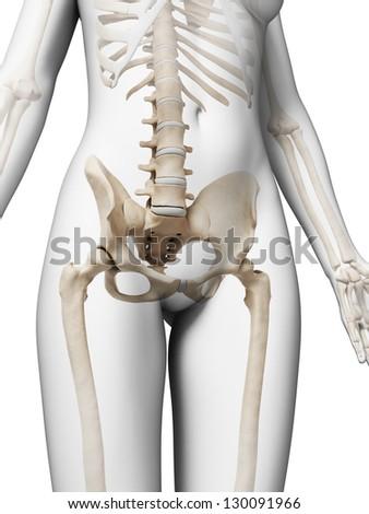 3d rendered illustration of the female skeleton - stock photo