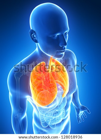 3d rendered illustration of the male lung - stock photo