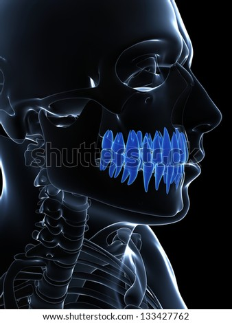 3d rendered illustration of the teeth
