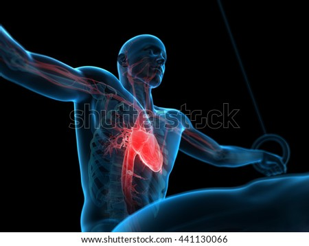 3d rendered, medically accurate 3d illustration of a human athlete - stock photo