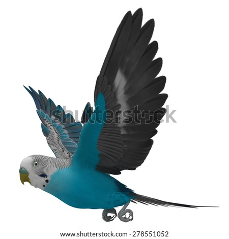 "3D Rendered Melopsittacus Undulatus ""Budgerigar Blue"" - stock photo"