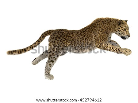 3D rendering of a big cat leopard isolated on white background
