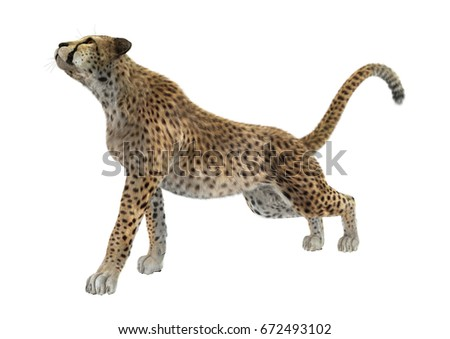 3D rendering of a cheetah isolated on white background