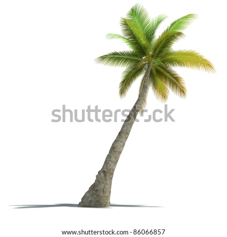 3D rendering of a palm tree on a neutral white background - stock photo