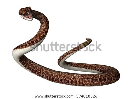 3D rendering of a rattlesnake isolated on white background