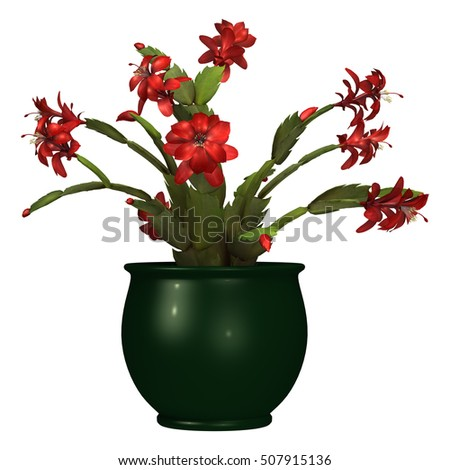 3D rendering of a red Christmas cactus or schlumbergera isolated on white background