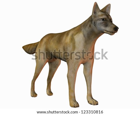 3D rendering of a watchful coyote