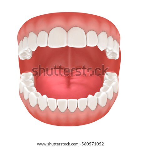 Teeth names and locations in human mouth and their functions