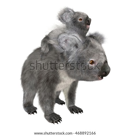 3D rendering of koala bears isolated on white background