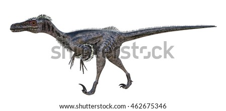 3D rendering of Velociraptor.