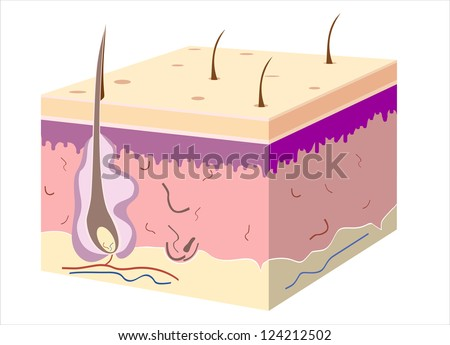 3D skin oblique with cut away epidermis - stock photo