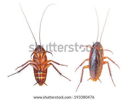 2 Dead cockroach isolated on a white - stock photo