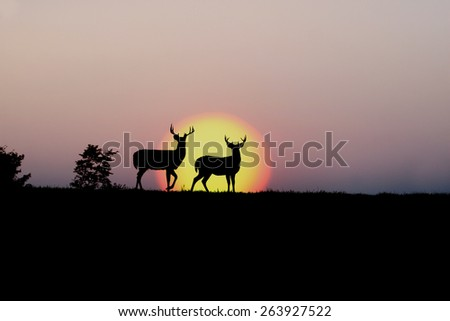 Deer Shed Antler - stock photo
