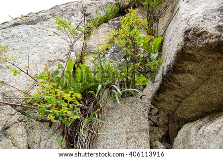 delicate flowers grow and bloom on the rocks clinging to the cracks in the rocks