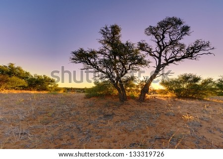 Desert Sunset. Grootkolk, kgalagadi transfrontier park, South Africa - stock photo