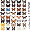 40 different butterflies - stock photo