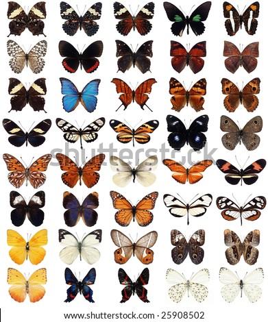 40 different butterflies - stock photo