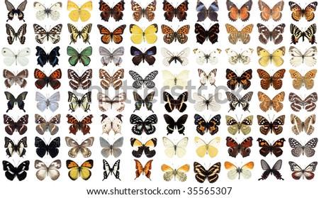 80 different butterflies - stock photo