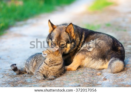Dog and cat relaxing outdoors in summer - stock photo