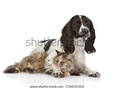 dog embraces a cat. looking at camera. isolated on white background