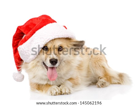 dog in red christmas Santa hat, isolated on white background - stock photo