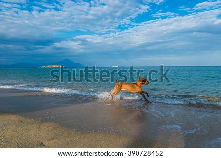 Dog playing at the beach on summer holidays - stock photo