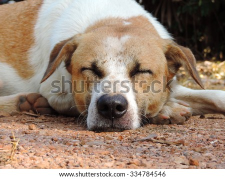 Dog sleeping outdoor.