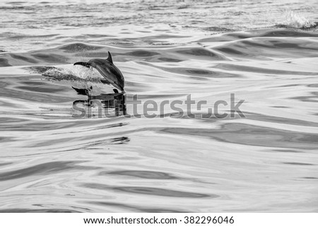 dolphin jumping outside the sea in black and white