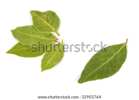 dried bay leaf isolated on white
