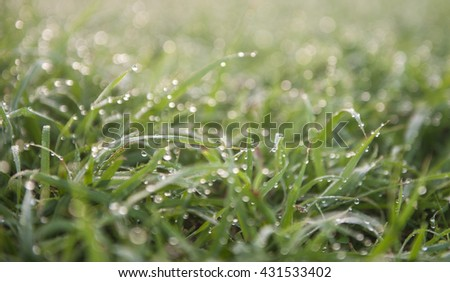 Drops of dew on the morning grass.