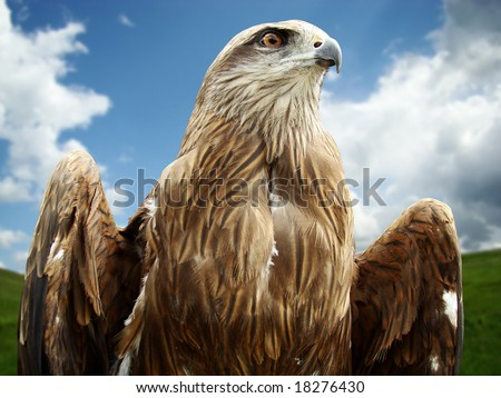eagle head over the blue sky - stock photo